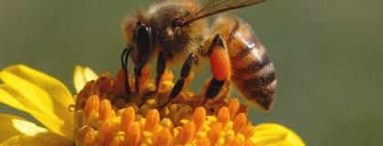 Pčelinje carstvo